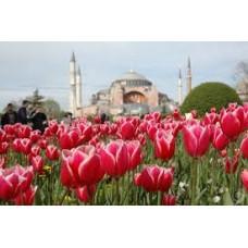 Екскурзия за Фестивала на лалето 2018 в Истанбул - нощен преход, Турция